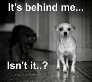 cat_Dog_ItsBehindMeIsntIt