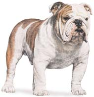 Bully Breeds Information Sheet (6/6)