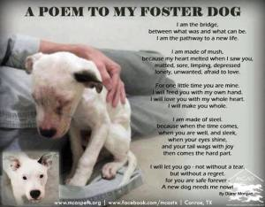 A Poem to My Foster Dog by Diane Morgan